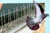 Как избавиться от птиц на крыше дома и балкона?